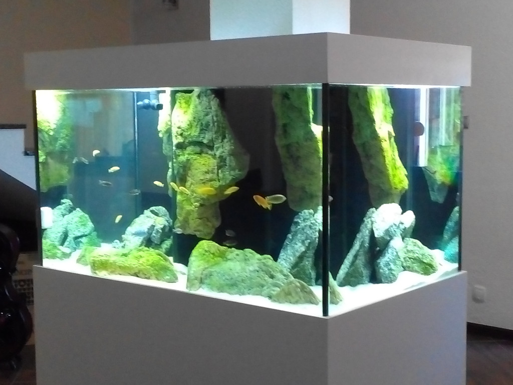 African cichlids aquarium adn aquarium design for Aquarium design